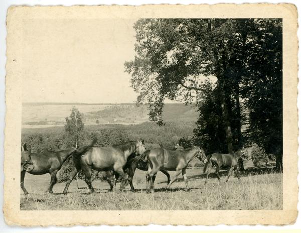 Neben den Rindern wurden auch einige Pferde gehalten